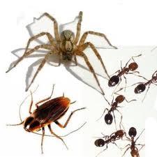 Order Pest Control Service
