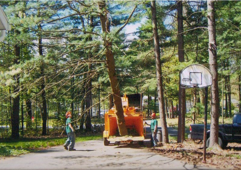 Order Tree Work & Chipping