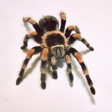 Order Spiders Extermination