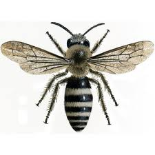 Order Bees Extermination