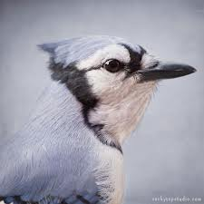 Order Bird Control Service