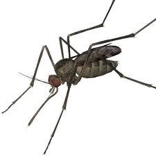 Order Mosquito Control Service