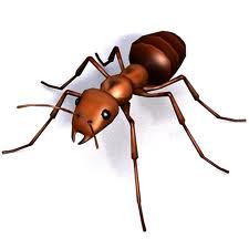 Order Ant control service