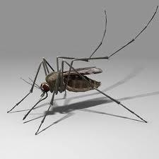 Order Mosquito abatement