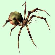 Order Spider control service