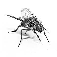 Order Flies Extermination