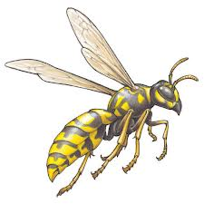 Order Wasps Extermination