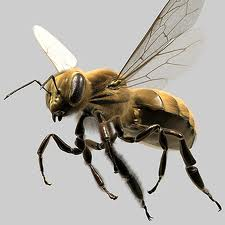 Order Bee Removal or Control Service