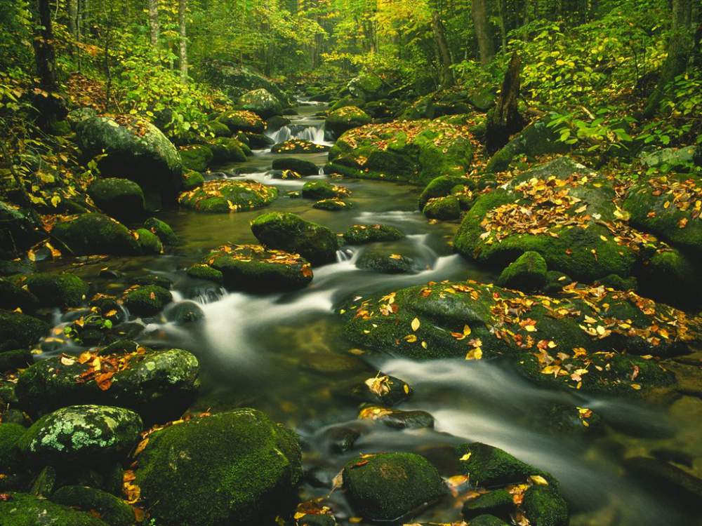Order Fall Colors in the Smoky Mountains Tour