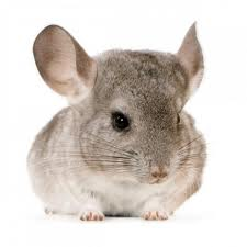 Order Rodent Control Treatment