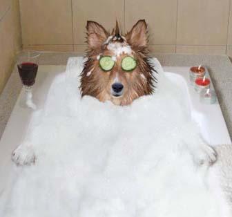 Order Pampered Bathing