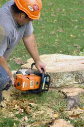 Order Tree and Stump Removal