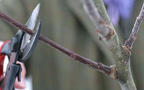 Order Winter Pruning