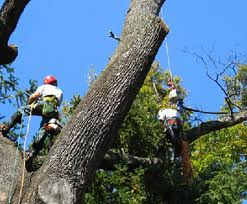 Order Hazardous Tree Removal