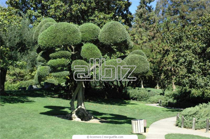 Order Tree Disease Treatment