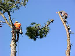 Order Tree Removal
