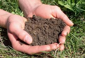 Order Soil Testing