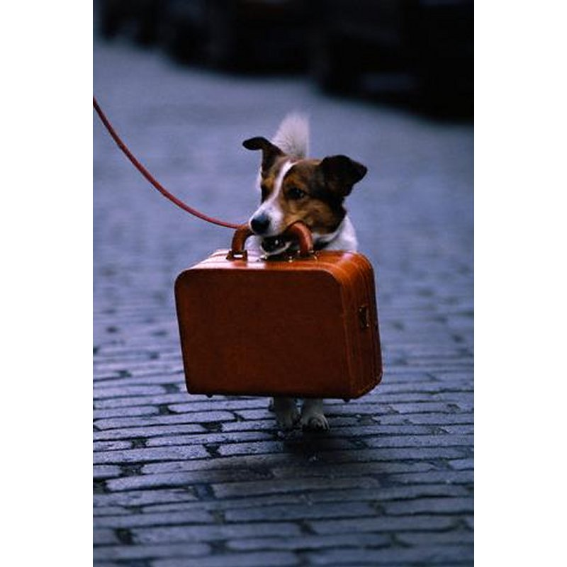 Order Travel with Pets