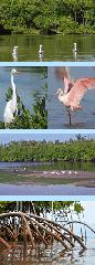 Daily Mangrove Eco-Tours