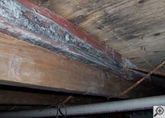 Repair Wood Damage