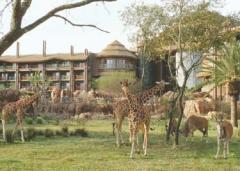 Disney's Animal Kingdom Lodge House
