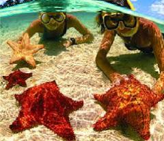 Stingray, Coral Gardens & Starfish Combo Tours