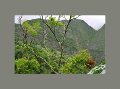 Magnificent Maui Tour