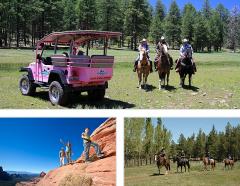 Scenic Rim & Ranch Combo Tour