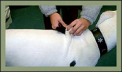 Pet Microchiping