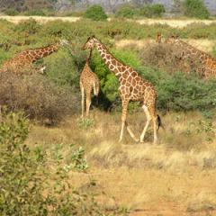 Kenya & Tanzania: The Safari Experience tour