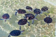 Island & Turtle Farm Combo tour