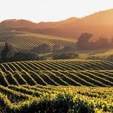 5-nights Signature California Wine Country Tour