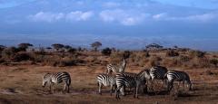 Amboseli Camping Safari tour