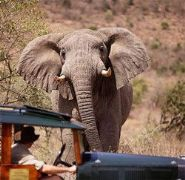 Intimate Enchantments of Kenya tour