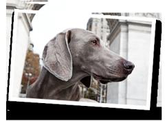 Downtown Pet's Pet Photography