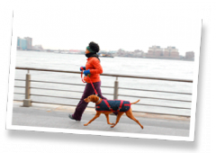 Downtown Pet's Dog Running
