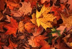 Fall (Leaf Removal) Cleanups