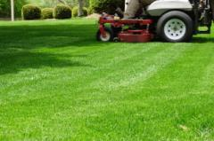 Lawn Maintainer Care