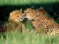 8-nights Kenya Family Safari