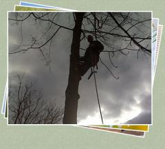 Tree Pruning Services – Trees and Shrubs