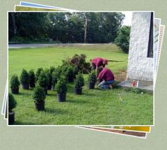 Large Tree Plantings and Installation