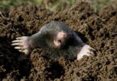 Residential and Commercial Mole Control