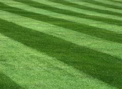 Lawn Mowing Programs