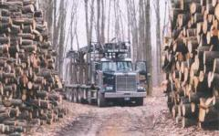 Insurance for the Forest Industry