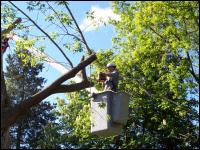 Tree Service with the top-notch Milwaukee tree