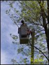 New Berlin Tree Pruning