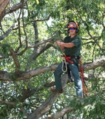 Custom Tree Pruning