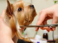 Grooming for Dogs & Cats