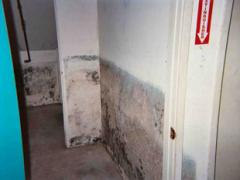 Mold Remediation & Mold Odor Removal