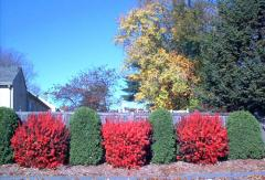 Bushes/Shrubs Planting